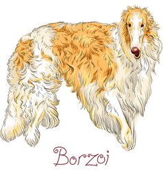 Borzoi dog breed vector