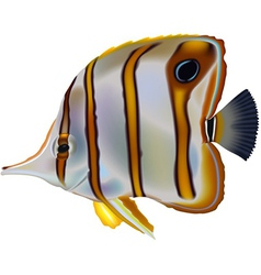 Butterflyfish vector image