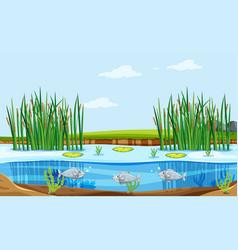 Fish pond nature scene vector