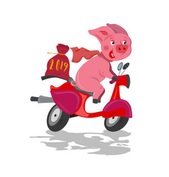 funny pink pig rider on a red fast bike scooter vector image