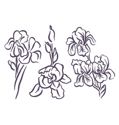 hand drawn sketch of iris flower vector image