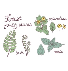 Forest grassy plants set vector image