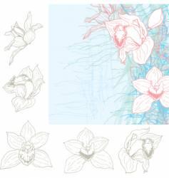 orchid sketch vector image vector image