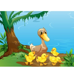 A duck and her ducklings at the riverbank vector