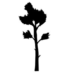 Big tall pine vector
