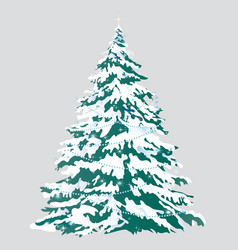 christmas tree with snow-covered branches isolated vector image