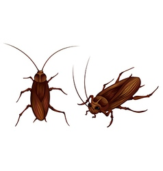 cockroaches vector image