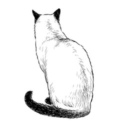 Freehand drawing sitting domestic siamese cat vector