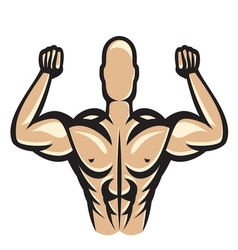 Muscle13 vector