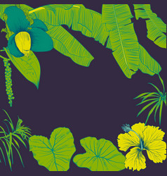 hand drawn of tropical plants banana leaves and vector image