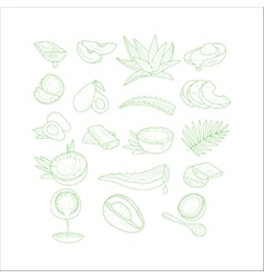 Aloe Avocado and Coconut Set vector image