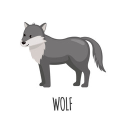 cute wolf in flat style vector image