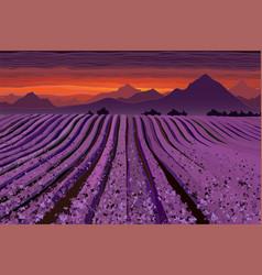 Lavender field at dusk lines flower bushes vector