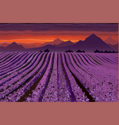 Lavender field at the dusk lines of flower bushes vector