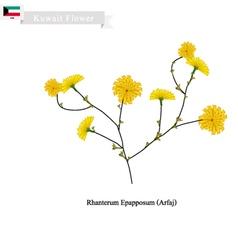 Rhanterum Epapposum The Popular Flower of Kuwait vector