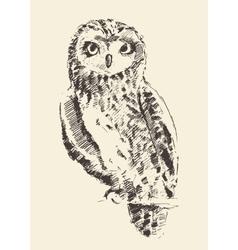 Owl vintage retro hand drawn sketch vector image
