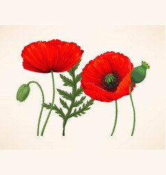 set of poppies vector image
