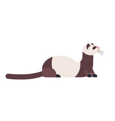 Cute domestic ferret or wild polecat adorable vector