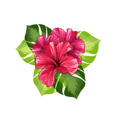 hawaiian hibiscus red fragrance flowers and vector image