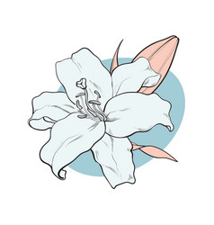 Lilly bloom in pastel colors in sketch style vector