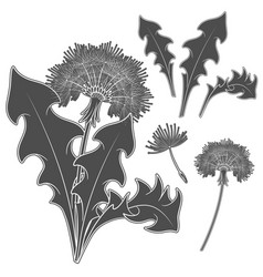 set images with a dandelion vector image