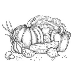 vegetables engraving style vector image vector image