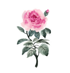 Hand drawn watercolor pink flower isolated on vector