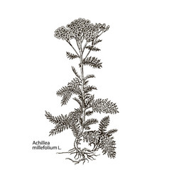 Images of medicinal plants detailed vector