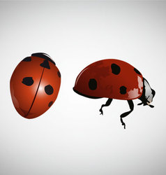 Lady bugs vector