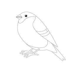 Bullfinch bird lining draw profile vector