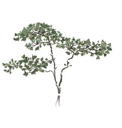 Chinese tree vector image