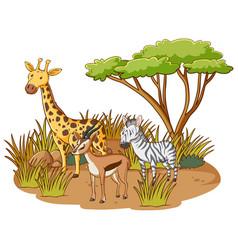 wild animals in savannah forest on white vector image
