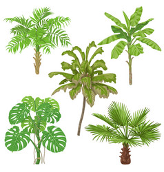 tropical plants isolated vector image vector image