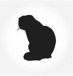 cat black silhouette on white vector image