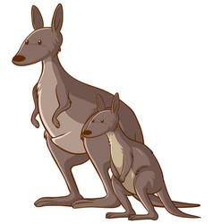 mother and baby kangaroo cartoon on white vector image