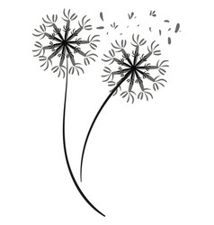 Pair a dandelion silhouette or color vector