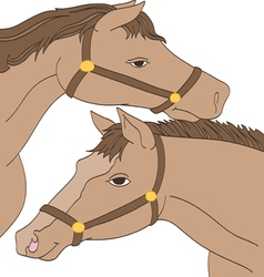 Twin Horses vector image