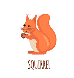 cute squirrel in flat style vector image vector image