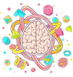 colorful of model of human brain top view on vector image