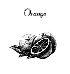 hand drawn vintage isolated orange vector image