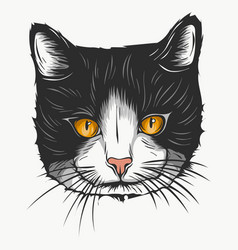 sketch of a stylized kitten s face vector image