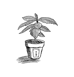 Tree growing in pot vector