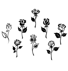 Beautiful roses silhouettes vector
