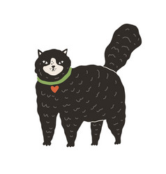 cute black fluffy cat standing on all four paws vector image