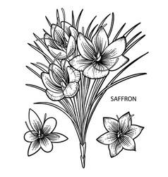 Graphic saffron flowers vector