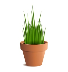 green grass in a pot isolated on white background vector image