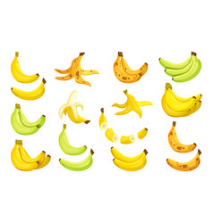 set bananas sweet ripe bananas bunch separate vector image