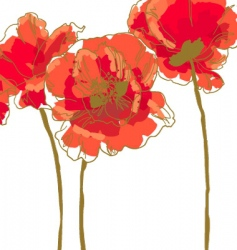 three flower of poppy vector image