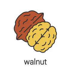 Walnut color icon vector