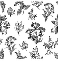 sketch herbs and flowers seamless pattern vector image vector image